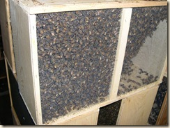 three pounds of bees