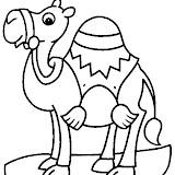 camello3.jpg