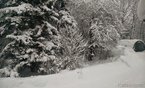 8. 2-5-15 snow storm
