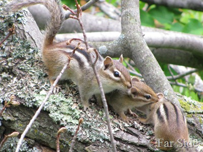Three Chipmunks