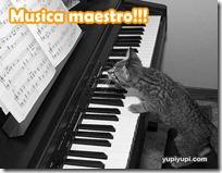 gato pianista blogdeimagenes (36)