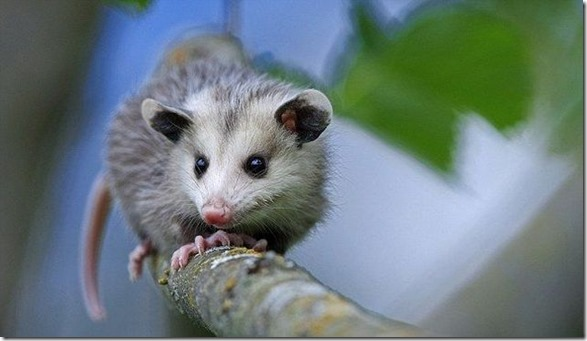 funny-animals-cute-37