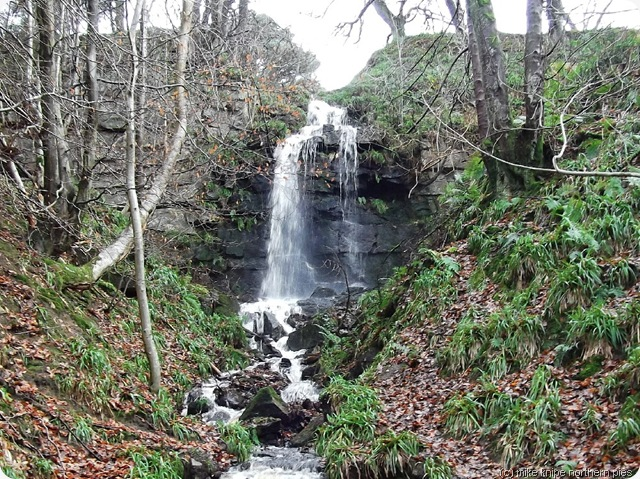 waterfall near blanchland