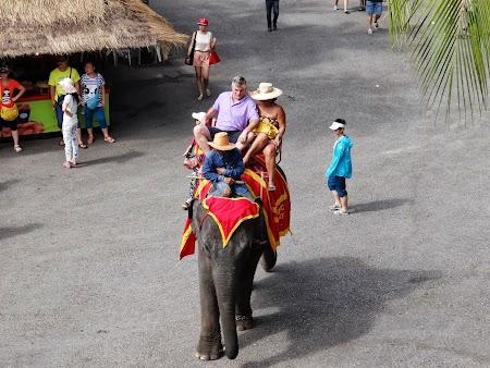 20. turisti calare pe elefanti.JPG