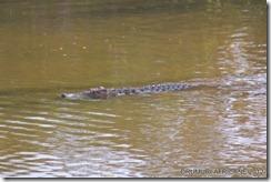 Pestele Tigru si Crocodilii