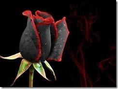 Ella la rosa