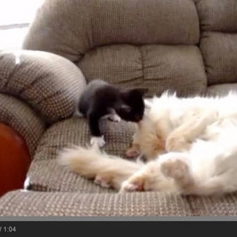 Ενοχλητικό γατάκι