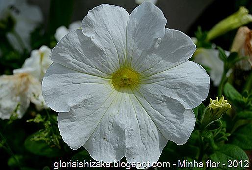 Glória Ishizaka - minhas flores - 2012 - 18