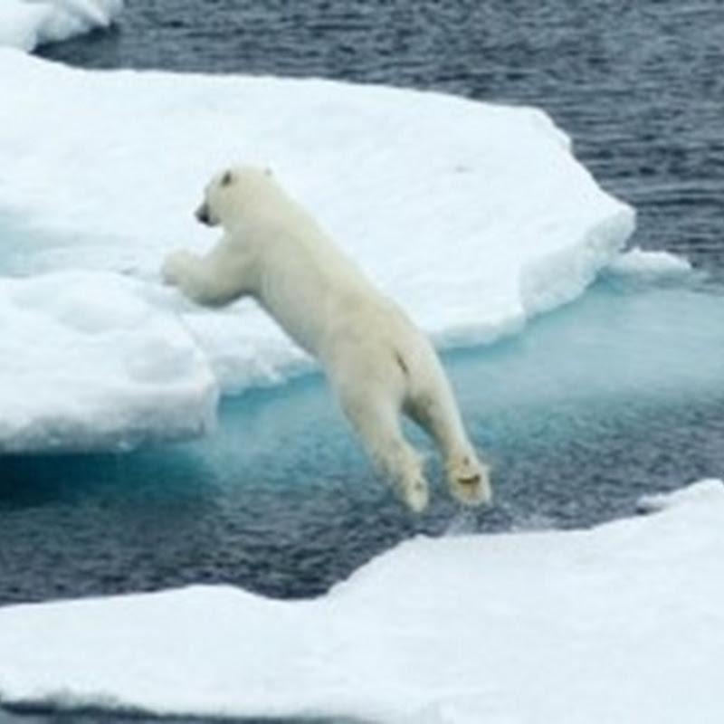 Más del 70 % del hielo del Océano Ártico se derrite a causa de la actividad humana