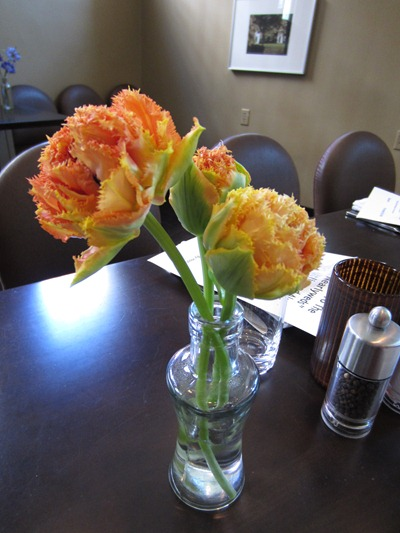 Novelty Orange Tulips | Ideas in Bloom