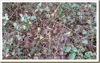 Yellow Flowers Jan 19 2015 at Thoughts in Progress