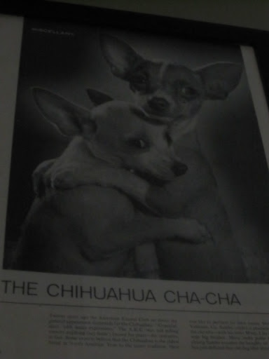 Not only were there mermaid collectibles around, but lots of Chihuahua ones, too!