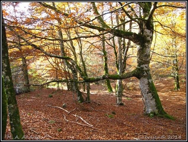 Lantz otoño 096