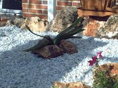 Decoraci n de jardines con piedras blancas dise o y for Jardines pequenos con piedras blancas