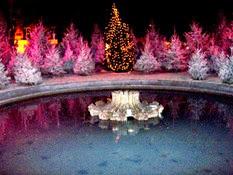 2005.12.17-007 sur les Champs Elysées