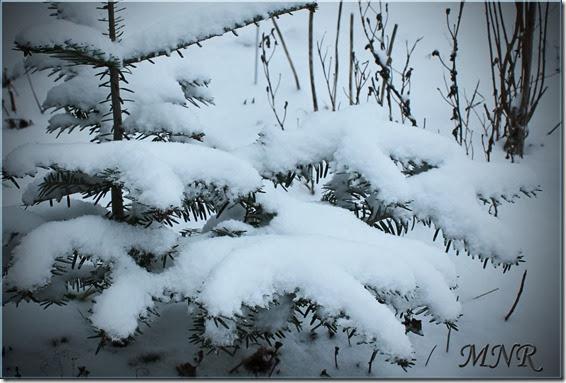 gran-m-snow