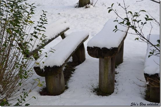 Winter2015 (1)