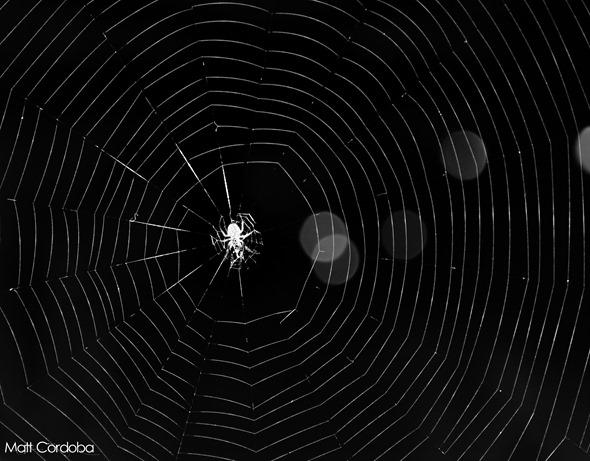 Teia de aranha incrível aspiral