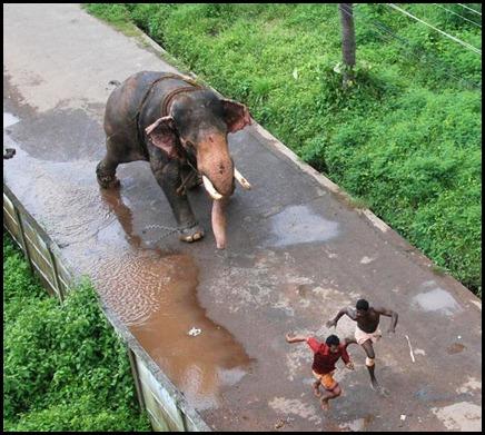 Vadakkunnathan Krishnan Runs Amok