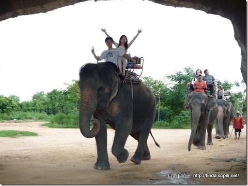 泰國芭達雅-騎大象1