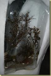 Ice Frozen Plants