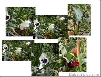 fleurs mouillees 2