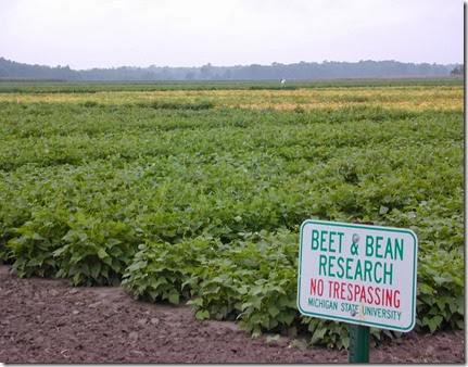 Research at the Saginaw Valley Bean and Beet Farm has enabled farmers to harvest more beans per acre and remain No. 1 in dry bean production nationally.
