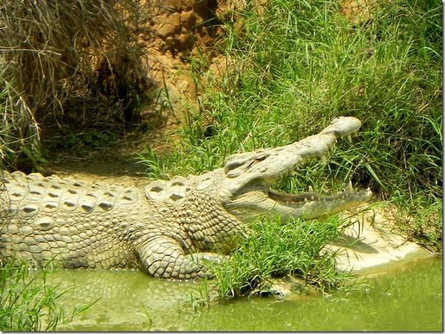 Kalimba_Reptile_Park-23_thumb1