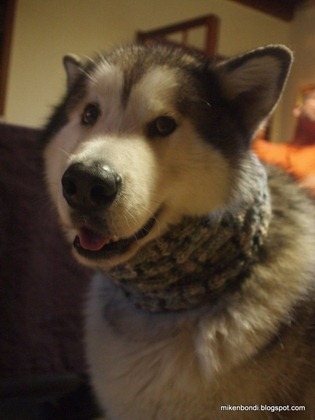 Snood dog (3)
