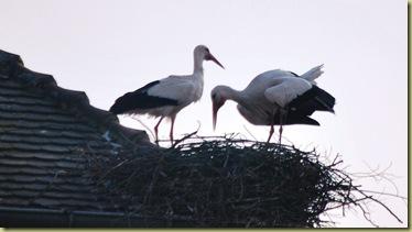 2012-03 Munster Stork Cradle