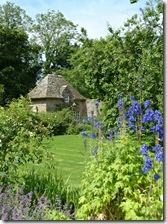 cottage and delphiniums