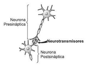 Sinapsis en una neurona