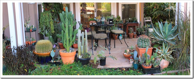 121208_fy_succulents_pano