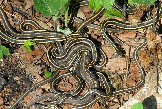 narcisse-snake-pits-5