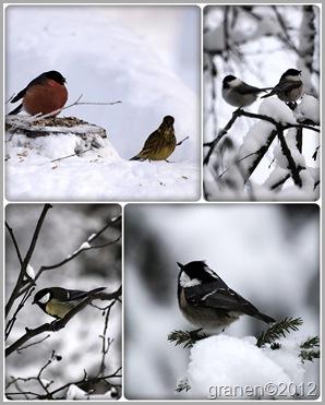 fåglar på matningarna.