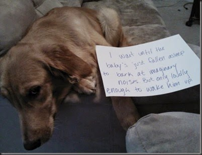 bad_dogs_publicly_shamed_640_09