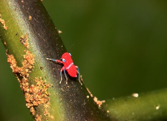 Amazing Pictures of Animals, photo, Nature, exotic, funny, incredibel, Zoo, Leafhopper, Insecta, Alex (5)