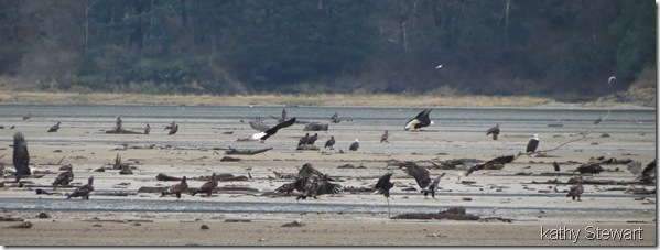 more eagles on the flats