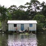 A vida em Mamirauá