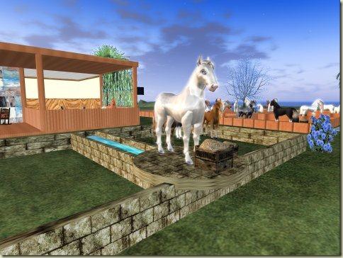 Hayati's Horse Ranch in Wharf 02