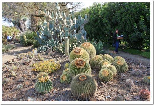 130413_RBG_Echinocactus-grusonii_03