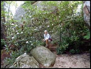 26a - Rock Garden Trail - Rhododendron
