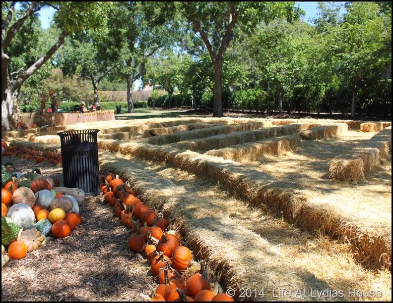 Dallas Arboretum - pumpkin festival-maze of hay bales