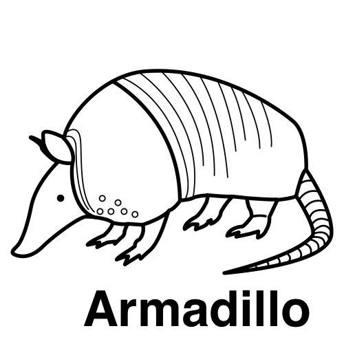 COLOREAR DIBUJOS DE ARMADILLOS