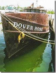 artwork-dover-rose-reduced