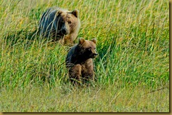 untitled Sow and Cub_ROT4251 September 03, 2011 NIKON D3S