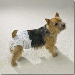 incontinenza urinaria nel cane e nella cagna 3