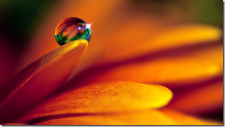 imagini desktop macro