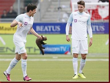 Musang Eropa menggigit bek FC Zurich Loris Beniot