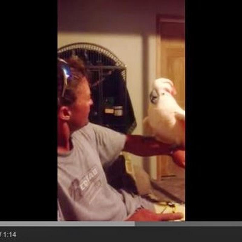 Crazy Cockatoo